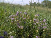 Abiotic Factors that create the Prairie Grassland Biome
