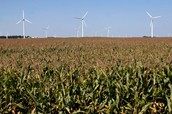 Wind and Corn!