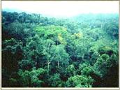 Rain Forest descriptioin