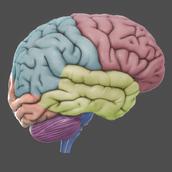 2. 3D Brain