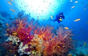 Exumas Cays Land and Sea Park