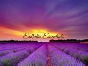 Euōdia Essentials