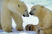 Wildlife at risk