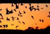 of bats!