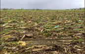 Crop and Forest Damage