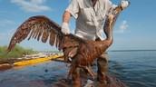 Oil in the oceans