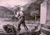 Slave Plantaion