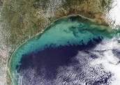 Question 7: What are dead zones in the Gulf of Mexico? What causes this situation? What can be done to help stop them?