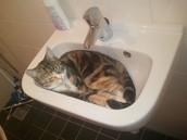 Deze kat ligt in de lavabo