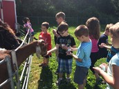 Adventures with Animals! Barnyard visits Pleasant Street