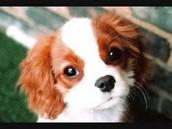 Name:    Dog