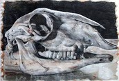 Skull Form
