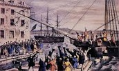 The loyalest side of the boston tea party