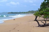 החוף עצמו