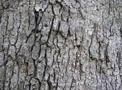 Tree bark. :l