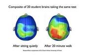 An Active Learning Brain