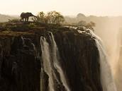 africa has amazing animals