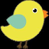 Transitional Kindergarten Yellow Birds