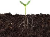 Specifics of Soil