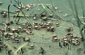 Estuary Animals