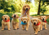 Top 7 Reasons Why Your Dog Needs a Daily Walk
