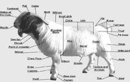 Goat Map