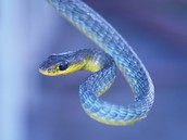 A rare blue snake as seen by The Ancient Mariner