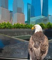 Eagle Card Reward