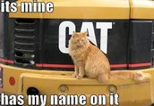This pretty kitty is insisting that Mr.Bill's tractor is his.