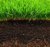 Organic Soil  (found in North Carolina)