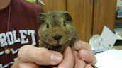 Meet Chubs!