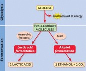 What Is Anerobic Respiration