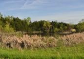 Gently Rolling Pastureland