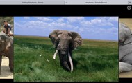 Elephant real