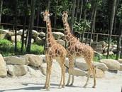 Southwick Zoo Trip