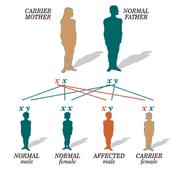 Color Blindness Chromosome