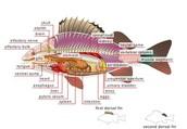 Internal Anatomy