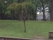 Producer: Tree
