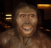 Early Hominini