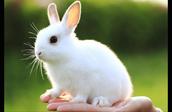 It's a bunny!!!!!