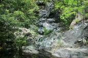 Monotone rain forest