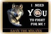 """""""Please join us in the fight against wolf hunting and trapping in MN!"""""""