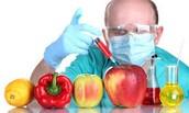 What are GMO's