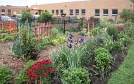 Community garden at Loveland elementary school