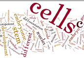 The Cell Cycle and Cell Division