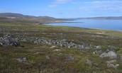 Dry Tundra