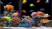 fish in an aquarium ------>