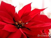Harbor House Wreath & Poinsettia Sale Ends this Friday!
