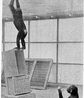 inzicht bij apen