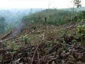How is deforestation started ?